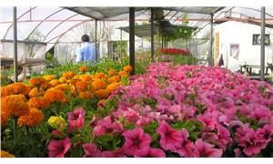 Marmaris Belediyesi yılda 500 bin adet mevsimlik çiçek üretiyor