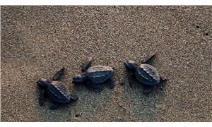 50 bine yakın yavru denizle buluştu