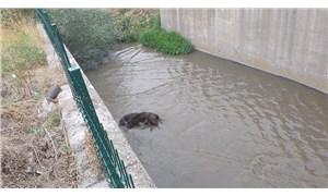 Ankara'da 3 köpeği zehirleyip su kanalına attılar