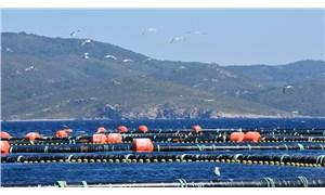 Orkinos Çiftliği 11 yıldır İzmir'in belası oldu