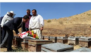 'Şükür duası' sırasında saldıran arıların kovanına çiçek bıraktılar