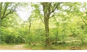 Bandırma Belediyesi ağaç bağışı için meydan okuyor