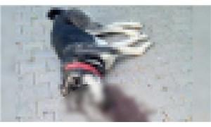 Dersim'de korucu sokak ortasında bir köpeği öldürdü