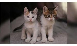 Kediler de sahipleriyle duygusal bağ kuruyor olabilir