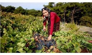 Kavacık'ta kadın üreticinin büyük başarısı