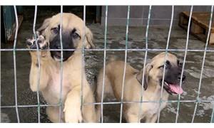 Hayvanların korunması için işbirliği şart