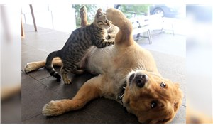 Annesinin terk ettiği kediyi Tarçın isimli köpek emziriyor