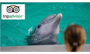 TripAdvisor, yunus ve balinaların tutulduğu tesislere bilet satmayacak