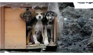 '4 Ekim Dünya Hayvanları Koruma Günü' hakkında bilinmesi gerekenler