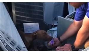 Dorian Kasırgası'yla bir ay enkaz altında kalan köpek kurtarıldı