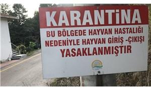 Bursa'da şap hastalığı karantinası