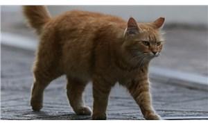 Uyuşturucu kuryesi kedi, tutulduğu hayvanat bahçesinden kaçtı
