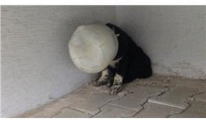 Yavru köpeğin başına plastik bidon geçirip, ölüme terk ettiler