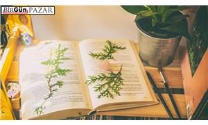 Hangi edebiyat kimi iyileştirir?