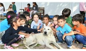 Çukurova Belediyesi'nden örnek kampanya: Her okula bir köpek