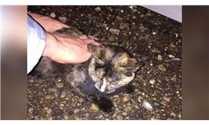 Uyuşturucu kuryesi kedi gardiyanlara yakalandı