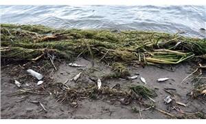Antalya'da cansız balıklar kıyıya vurdu