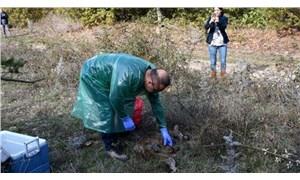 Çan'da ölü bulunan hayvanlarla ilgili inceleme ve soruşturma