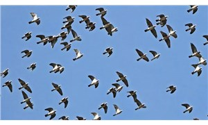 Hindistan'da 2 binden fazla kuş ölü bulundu