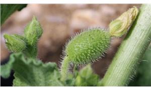 Meclis komisyonundan 'zehirli bitkiler' listesi