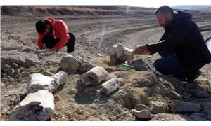 Kayseri'de 7.5 milyon yıllık fil fosili bulundu