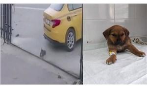 Esenyurt'ta yavru köpeği ezen taksicinin işine son verildi