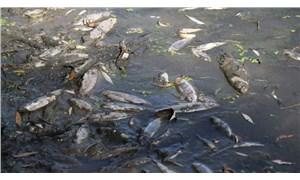 Karabük'te balık ölümlerine ilişkin inceleme başlatıldı