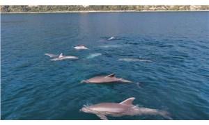 Yunusların Karadeniz'e yolculuğu Boğaz'da renkli görüntüler oluşturdu