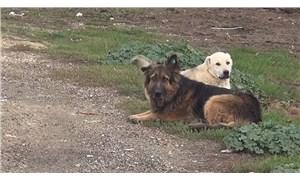 Çatalca Belediyesi'nden sokak hayvanlarının zehirlendiği iddialarına yönelik açıklama