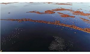 Gediz Deltası için UNESCO'ya başvuru