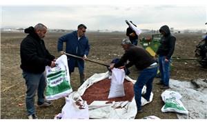 Yapılaşmadan kurtarılan AOÇ arazisine çiftçiye dağılmak üzere yem tohumu ekildi