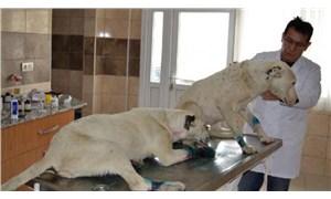 Ayaklarını bağladıkları köpekleri ölüme terk eden 3 kişi  gözaltına alındı