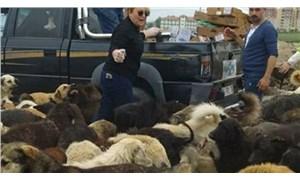 Kuzey Ormanları'na terk edilen hayvanların beslenmesi için etkinlik