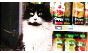 Bostancı'da esnafın düşman ilan ettiği kedi ortadan kayboldu