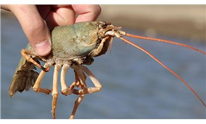 Van Gölü'nde yeni tehlike: Birileri bunları getirip buradaki su kaynaklarına attı