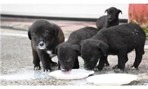 Kuyuya düşen 6 köpek yavrusu itfaiye ekiplerince kurtarıldı
