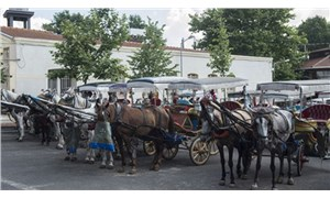 Adalar Kaymakamlığı, öldürülen atların sahipleri hakkında suç duyurusunda bulundu