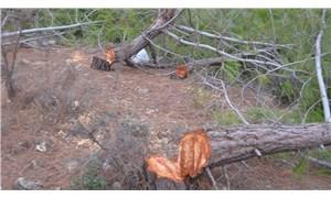Mersin'de bin 500 ağaç kesen adam tutuklandı