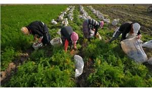 Üretici tarımsal üretimden kopuyor