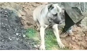 Hatay'da zehirlenen köpekle ilgili soruşturma