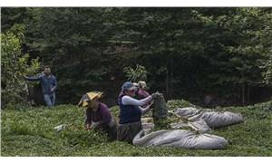 Zararı zamla kapatmaya çalışan ÇayKur'u Sayıştay uyardı: Çayın maliyeti düşürülebilir