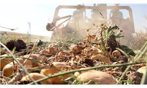 Patates ihracatına getirilen kısıtlama sonrası üretici tepkili