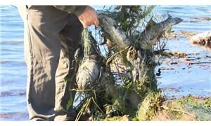 Sapanca Gölü'nde 'hayalet ağ' katliamı