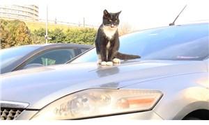Araçların motoruna giren kedilere dikkat