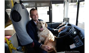 Üşüyen köpek halk otobüsüne sığındı