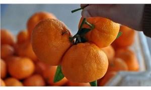 Rusya, 26 ton tavuk ve 40 ton mandalinayı Türkiye'ye geri gönderdi