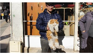 Tombul kedi Şerafettin esnafın ilgi odağı