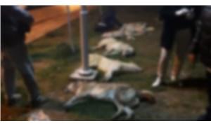 Ankara'da 16 köpeği katleden katillere 10'ar yıl hapis cezası