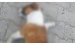 Çanakkale'de 20 sokak köpeğini zehirleyerek öldürdüler!