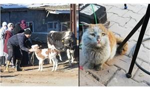 Türk Veteriner Hekimleri Birliği depremzede hayvanları ücretsiz tedavi edecek